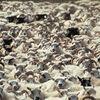 Festival der Schafe