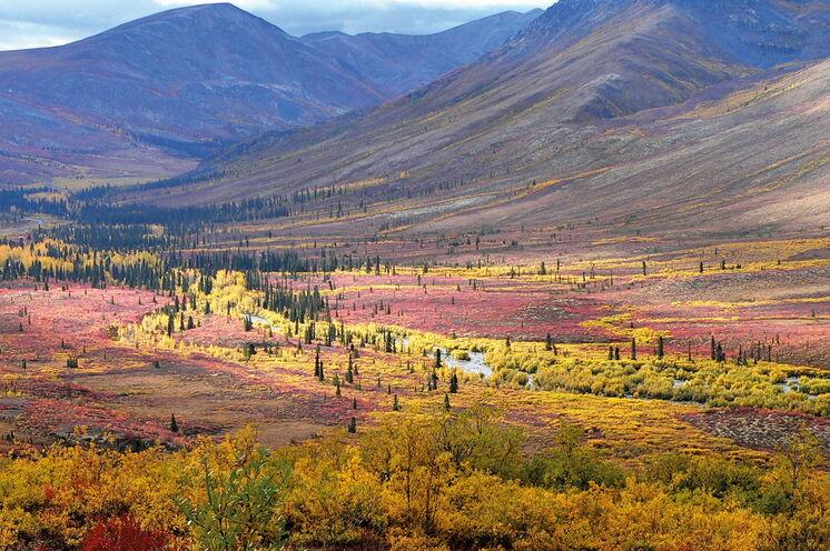 Prächtiges Farbenspiel im August im Yukon