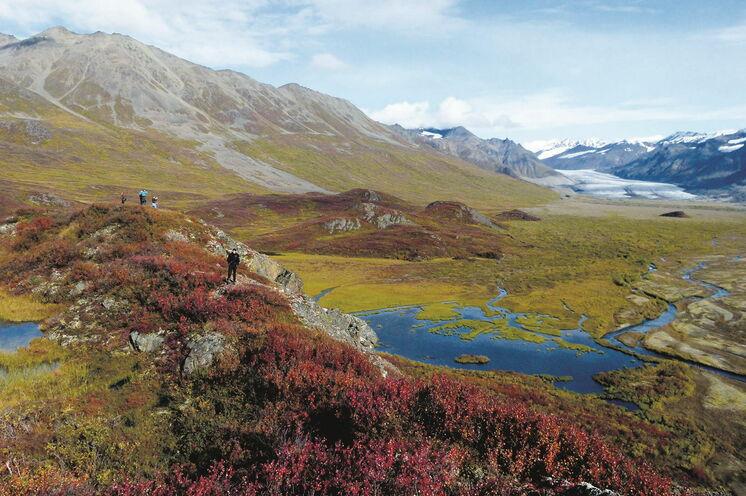 Die Pflanzenwelt Südost-Alaskas ist, bedingt durch die klimatischen Verhältnisse, eine sehr vielfältige