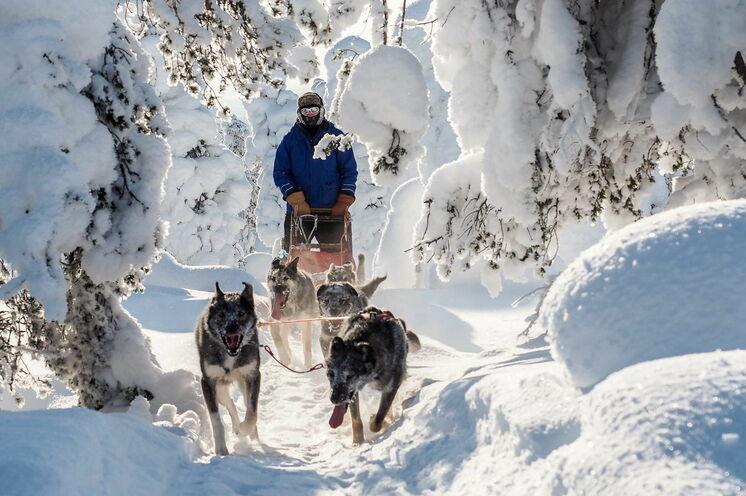 4 Tage unterwegs im Winterwunderland mit eigenem Huskygespann