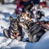 Mit Huskys durch Finnisch-Lappland