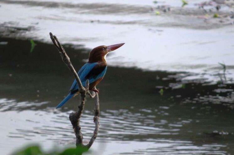 Der Chitwan-Nationalpark ist für seinen Tierreichtum bekannt und lädt am Ende einer Trekkingreise zum Entspannen ein. (Foto: Karin K.)