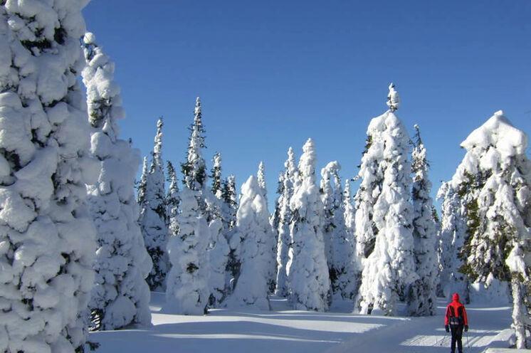 Auf der gesamten Strecke des Rajalta begleitet Sie eine traumhafte Winterkulisse, wie im Märchenwald!