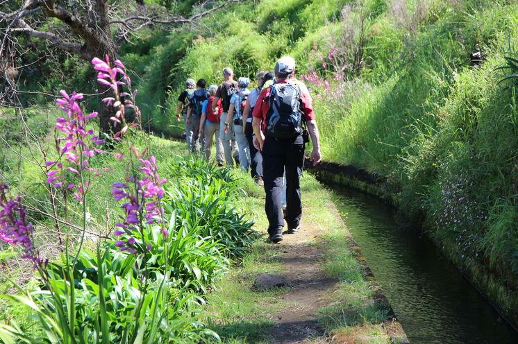Oft führen die Wege entlang der Levadas, dem ausgeklügelten Bewässerungssystem auf Madeira.