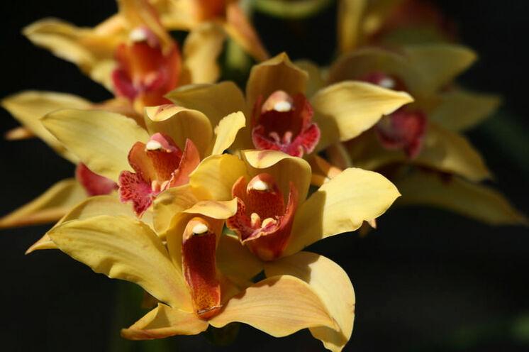 Wilde Orchideen in allen Formen und Farben, wie wir sie sonst nur als Zimmerpflanze erleben können.