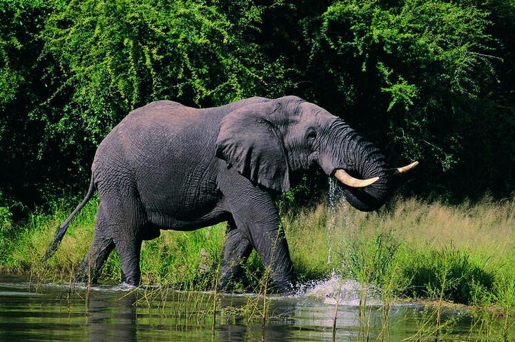 """Im Addo-Elephant-Nationalpark sind seit 2003 wieder alle """"Big Five"""" anzutreffen (15. Tag)."""
