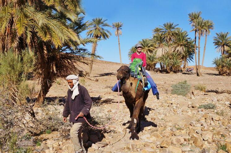 Das 6-tägiges Kameltrekking führt Sie an Oasen vorbei und teils auch durch die steinige Sahara