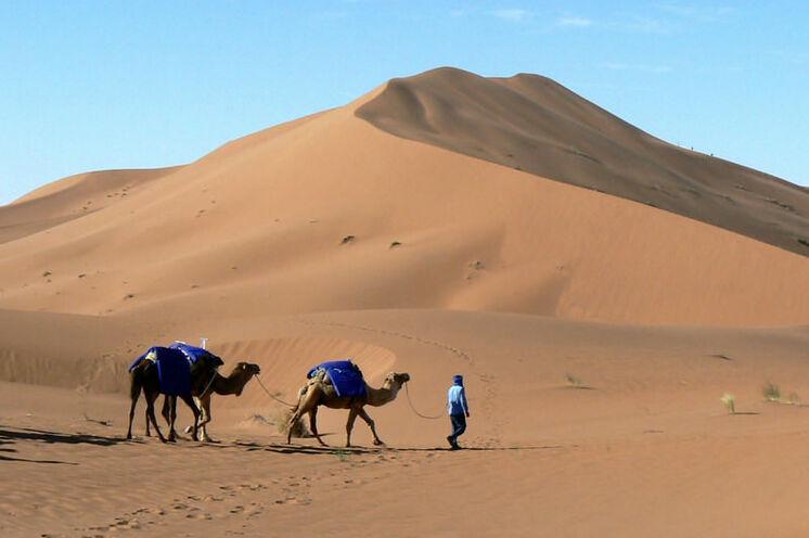 Berber-Guide mit Reitdromedaren bei den sanft gewellten Dünen von Chégaga