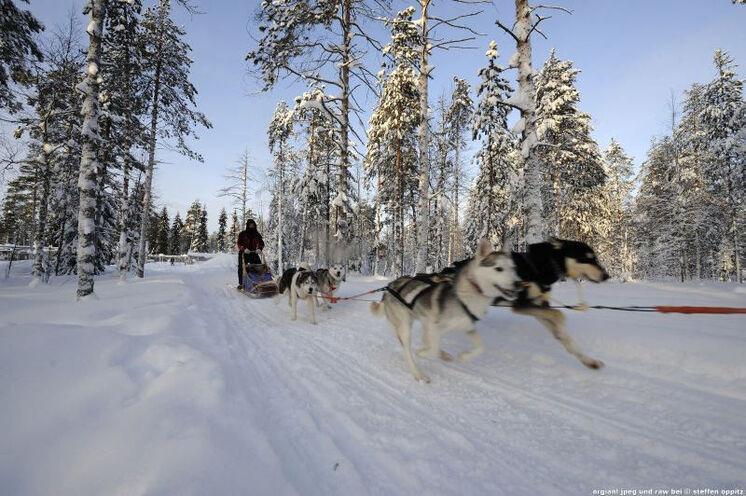 An zwei Tagen fahren Sie mit den Hundeschlitten- Ein einmaliges Erlebnis