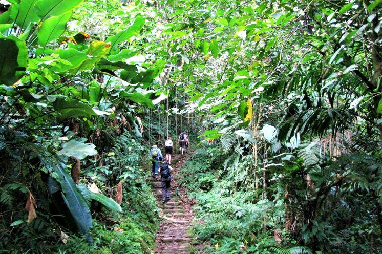In Serpentinen geht es bergauf durch tropische Vegetation