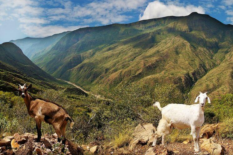 und radeln durch die abwechslungsreiche Berglandschaft des Chicamocha Canyons, mit 3000 Metern Kolumbiens tiefste Schlucht.