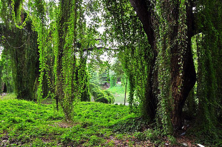 Wir zeigen Ihnen auch das grüne Havanna - den Stadtwald mit seinen mystisch verhangenen Bäumen.