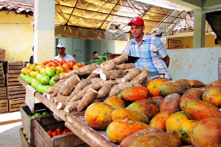Viele mercados bieten saisonale exotische Waren wie Papaya, Malanga, Avocados und Mangos.