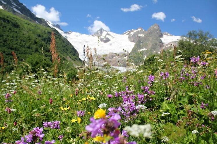 """""""Noch nie habe ich so viele Blumenwiesen gesehen,"""" schrieb eine Teilnehmerin."""