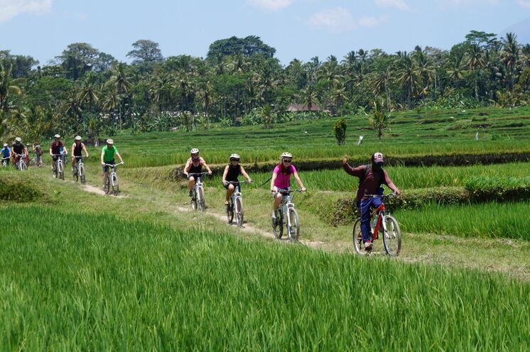 Sie durchradeln saftig-grüne Reisfelder und...