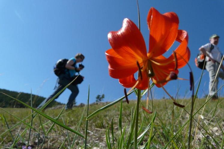 Die artenreiche Flora in der Tascheran Steppe (Bild von Fam. Effenberger)