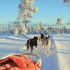 Husky-Abenteuer in Schwedisch-Lappland
