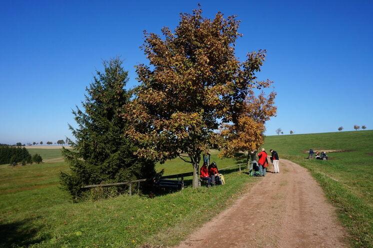 Rundwanderung durch das Osterzgebirge an nur einem Wochenende - der Weg führt durch Wald und über Feld