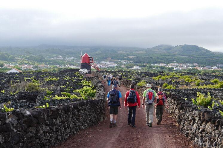 Ein Großteil der Weinberge auf Pico wurde zum UNESCO-Weltkulturerbe erklärt.