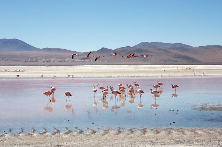 Flamingos sammeln sich an den wenigen Wasserstellen (Foto: Volkhard Weichsel)