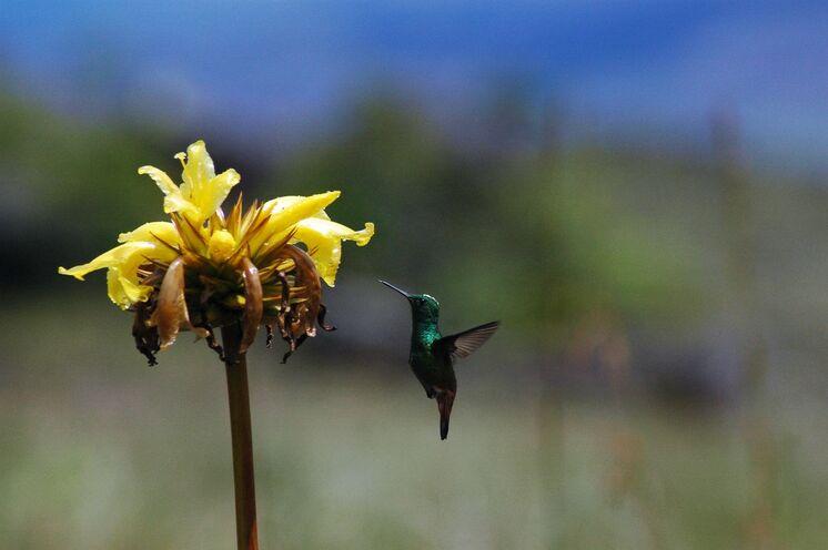 Auf der Lodge lassen sich wunderbar Kolibris beobachten