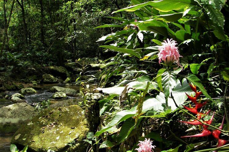 """Der Atlantische Regenwald ist einer der """"Hotspots"""" unserer Erde und weist eine höhere Artenvielfalt auf als der Amazonas-Regenwald"""