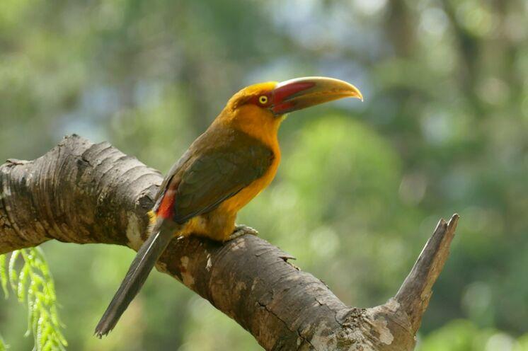 Auf Ihren Wanderungen entdecken Sie so manche seltene Vogelart ...