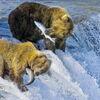 Alaskas Ruf der Wildnis