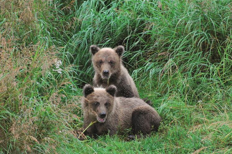 Mit etwas Glück entdeckt man auch Bärennachwuchs