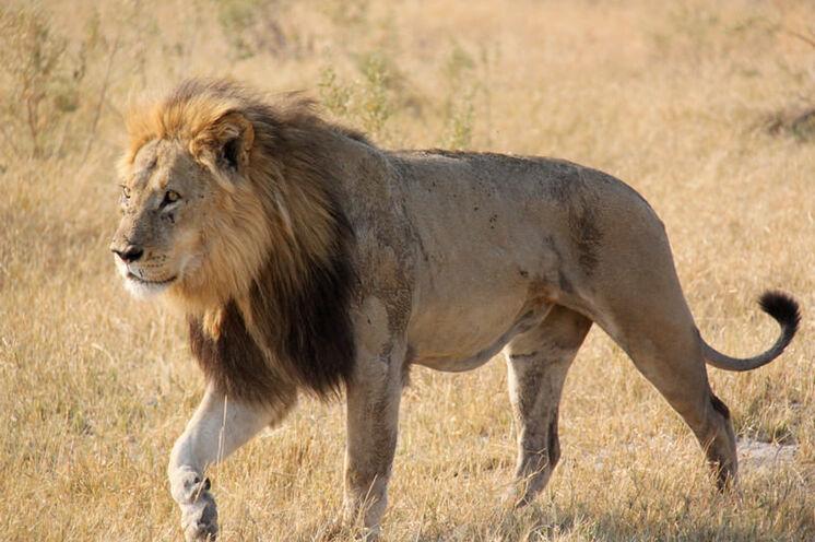 Im Central Kalahari Wildreservat geht es das erste Mal auf Pirschfahrt.