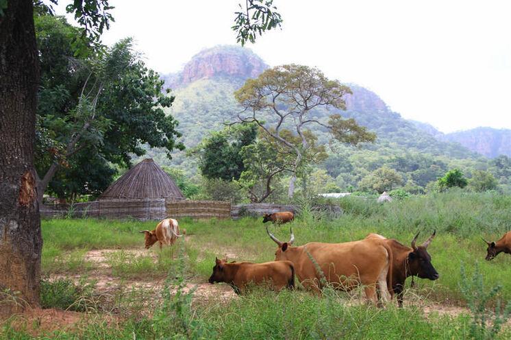 Die Senegalesen verweisen voller Stolz auf die bis 500 m hohen Hügel, die im Grenzgebiet zu Guinea liegen.