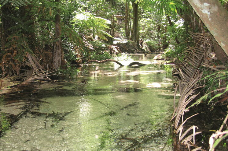 Glasklare Bäche inmitten üppigem Grün, hier im Eungella-Nationalpark