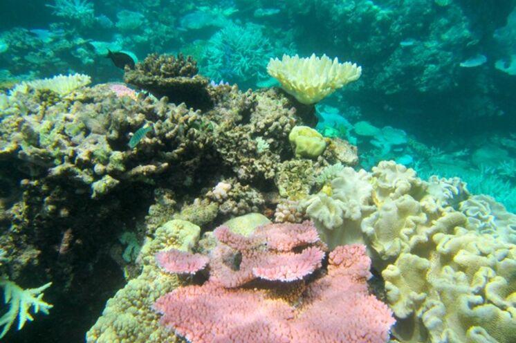 Maritime Unterwasserwelt im tropischen Norden
