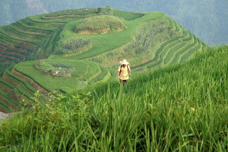 Gewandert wird durch die weltweit größten zusammenhängenden Reisterrassen in Ping An