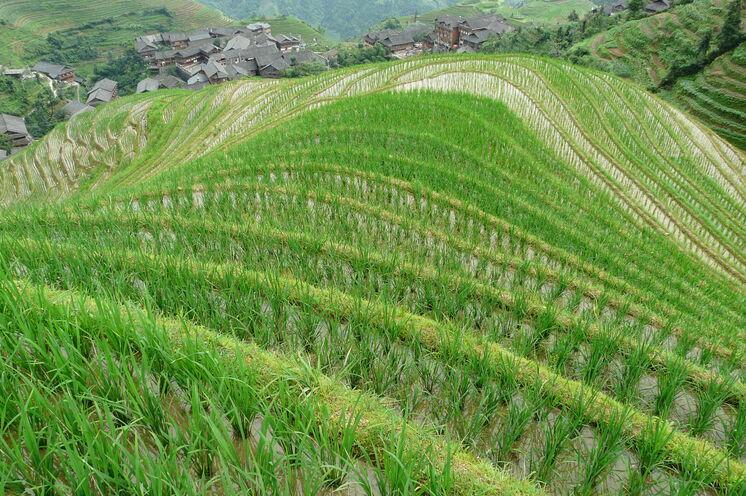 Von oben betrachtet immer wieder faszinierend, Chinas Reisterrassen