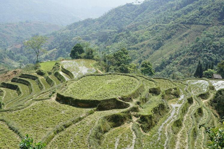 Zum 2,5-tägigen Trekking im ursprünglichen Bergland - zwischen Reisfeldern...