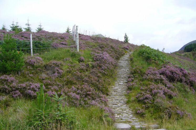 Besonders zur Blütezeit der Heide Ende August ist Schottland eine Reise wert