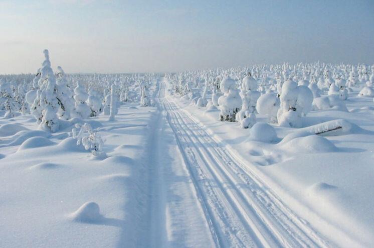Die Loipen werden von Motorschlitten gezogen. Teilweise laufen Sie sogar auf den Strecken der Grenzbeamten Ski.