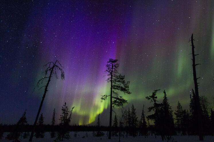 Krönung der Reise: Polarlichter!