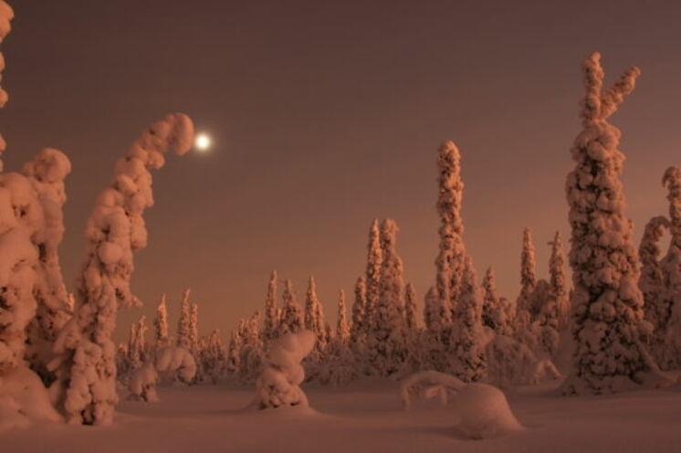Wenn der Mond scheint, ist es draußen so hell, dass man auch ein Buch lesen kann