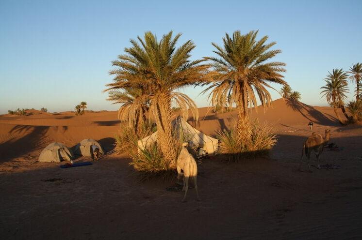 Ihr Wüstencamp! Am Fuße einer Düne und weit und breit ohne andere Menschen verbringen Sie die Nächte.