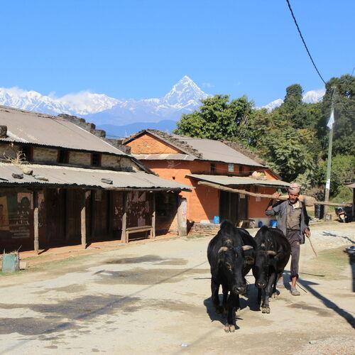 Lamjung Himal - auf einsamen Wegen in der Annapurna Region