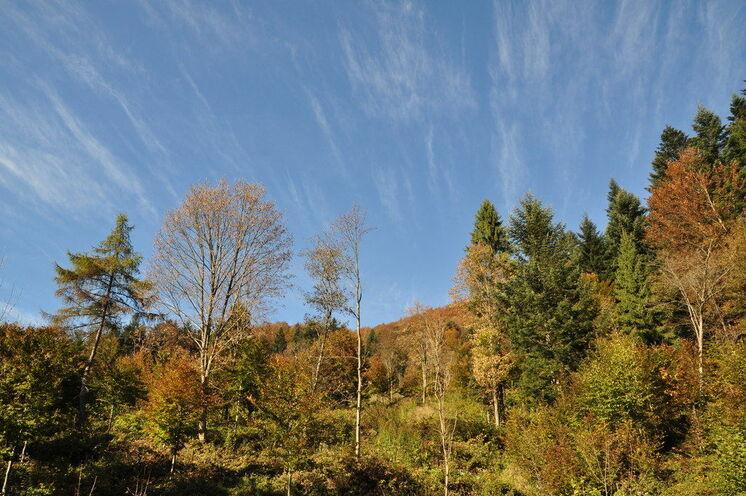 Willkommen in dieser zauberhaften Herbststimmung!