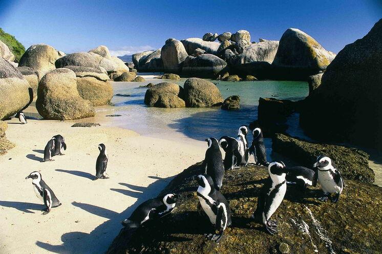 Auf dem Weg zum Kap statten Sie der Pinguin-Kolonie von Boulders Beach einen Besuch ab.