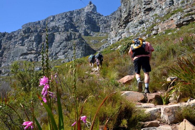 Die Besteigung des Tafelbergs ist einer der Höhepunkte. Wir führen Sie über die weniger begangene, spektakuläre India-Venster-Route hinauf.