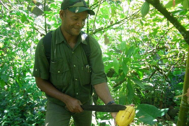 Ihr Guide erklärt die Verarbeitung der Kakakobohne