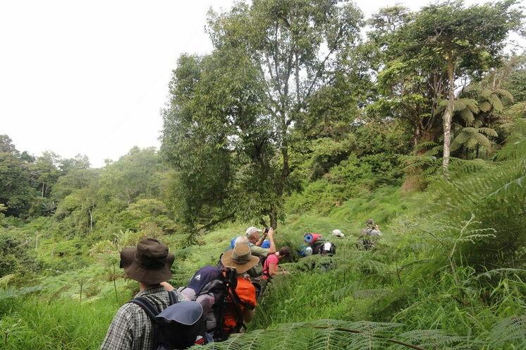 Auf Wanderung durch den Obô, der sãotoméische Bergregenwald
