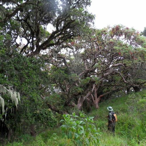 Wandersafari rund um den Ngorongoro-Krater