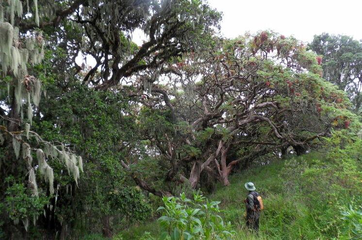 Wanderungen und Safaris verbinden sich auf dieser Reise ideal. Mit einem Ranger geht es zu Fuß durch das urwüchsige Ngorongoro-Gebiet.