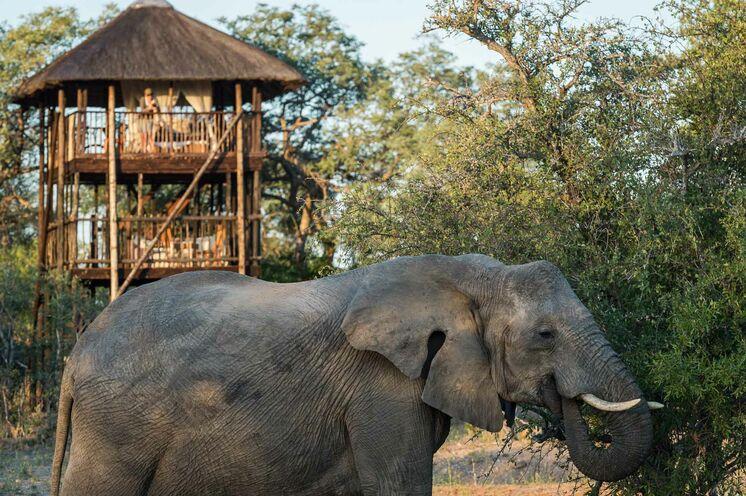 und auf die Tierwelt. (© Africa On Foot)